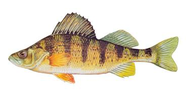 Fish spotter 39 s guide for Lake erie perch fishing hot spots